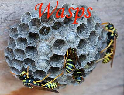Bees_Swarms_Utah_Salt_Lake_Removal_Wasps